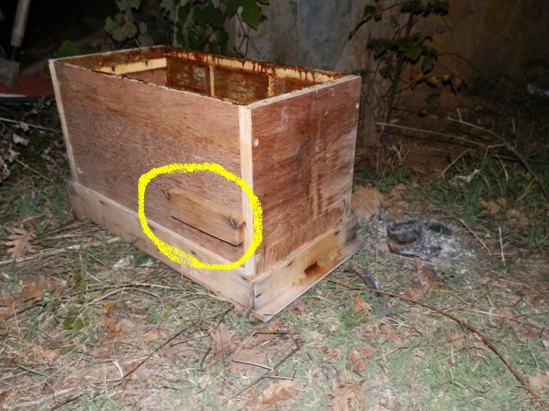 erkek arı yetiştirme ruşeti