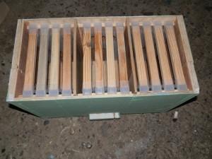 üçlü ana arı kutusu