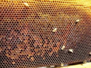ana arı üretimi ballı çıta