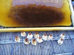 ana arı üretimi_janter ekipmanları