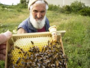 doğmuş ana arı yüksüğü