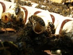 tutmuş larvalar